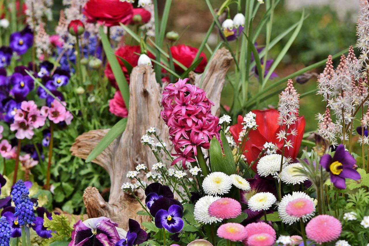 Durch Vermehrung gewinnt das Blumenbeet am Umfang